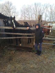 Закупаем лошадей на убой оптом