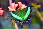 Экзотические Живые Бабочки изКоста Рикки