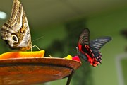 Восхитительные Живые Бабочки изЮАР