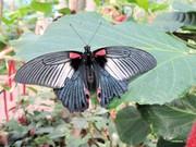 Яркие Живые Бабочки изФилиппин