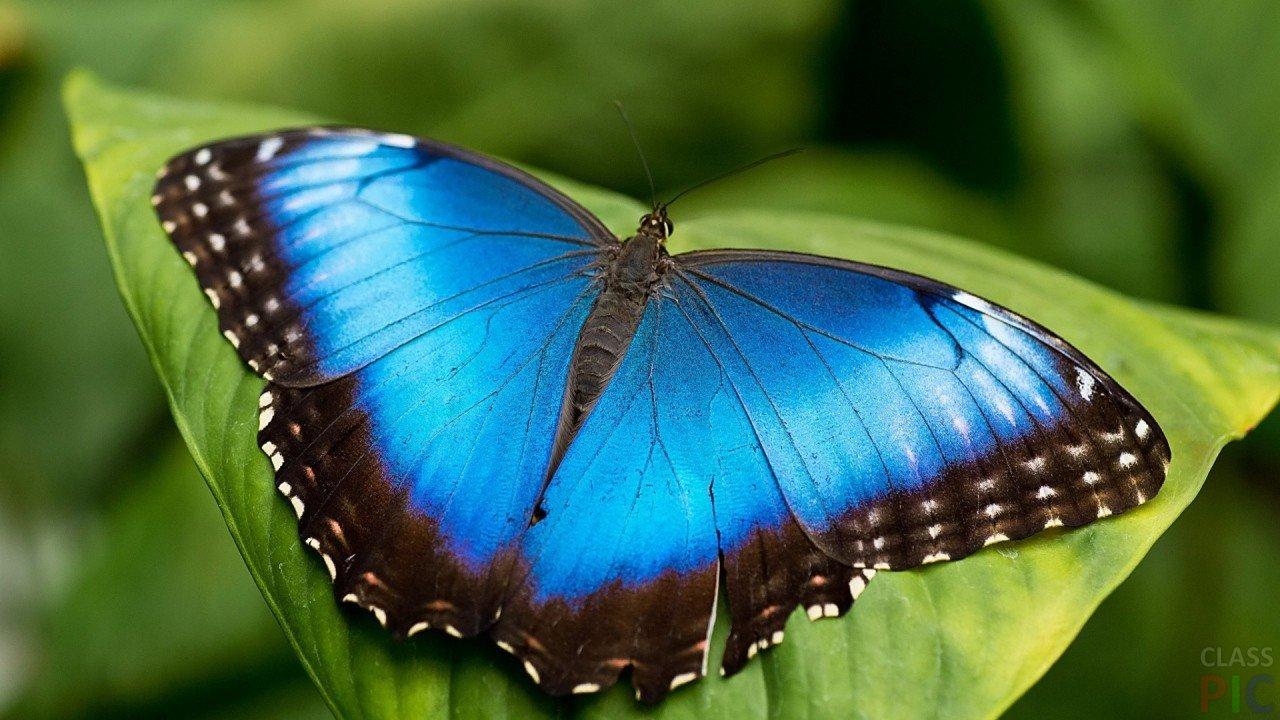 Восхитительные Живые Бабочки изАфрики