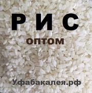 Рис для общепита и магазинов оптом
