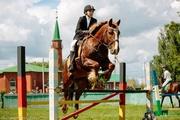 Продажа лошади мерин